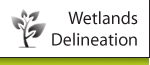 Wetlands Delineation